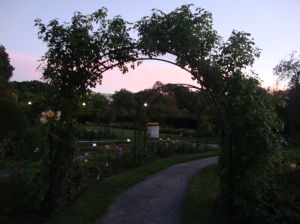 The garden at sunset